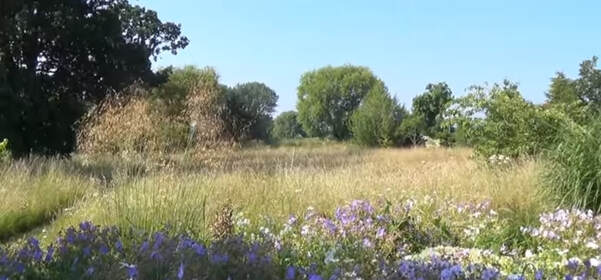 Meadow of long grass with purple flowers in the foreground and large trees surrounding the field