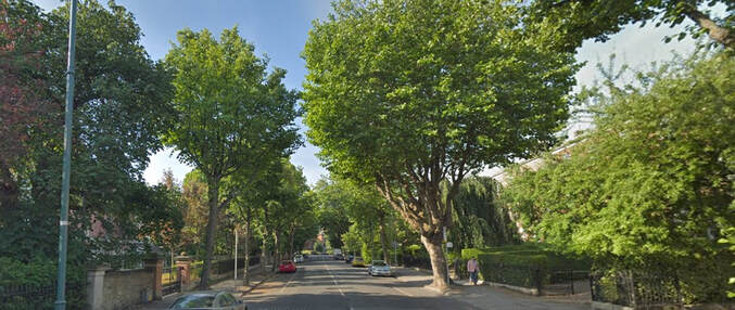 Raglan Road Dublin showing the tree lined road and large houses